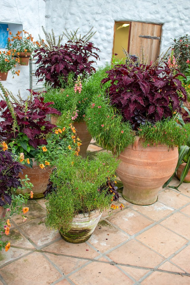 various shrubs and over hanging flowers fall from terracotta pots