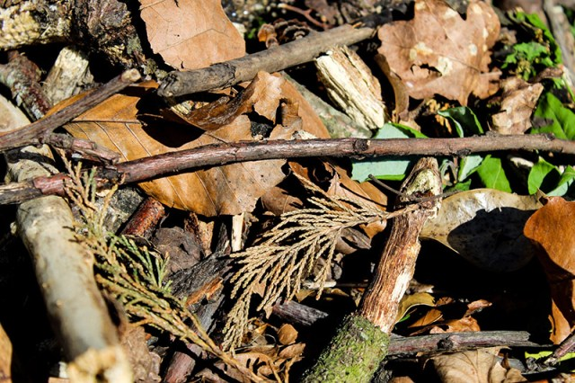 A collection of dead wood, twigs and dead leaves for a blog post about building a bug hotel.
