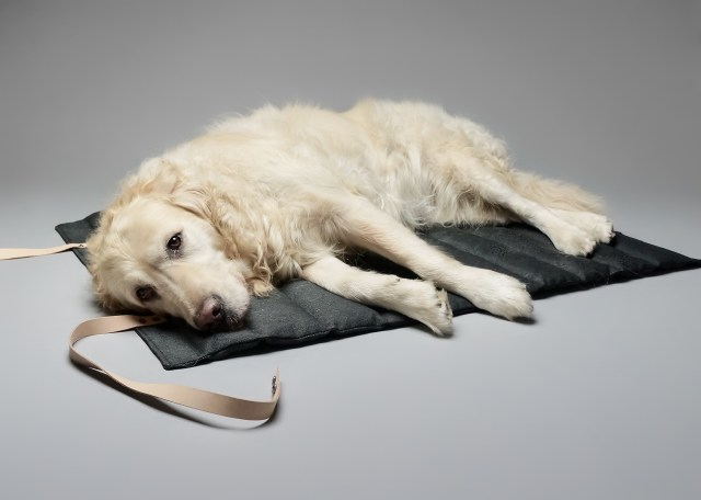 A large white dog lying on a cushioned mat, for a blog post about luxury dog beds.