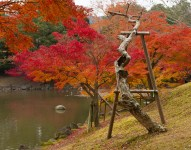 Dead tree and autumn colours, Sagiike Pond, Nara Park