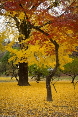 Autumn Colours outside Kumamoto Castle