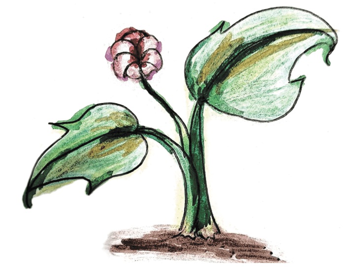 An illustration of a blooming plant