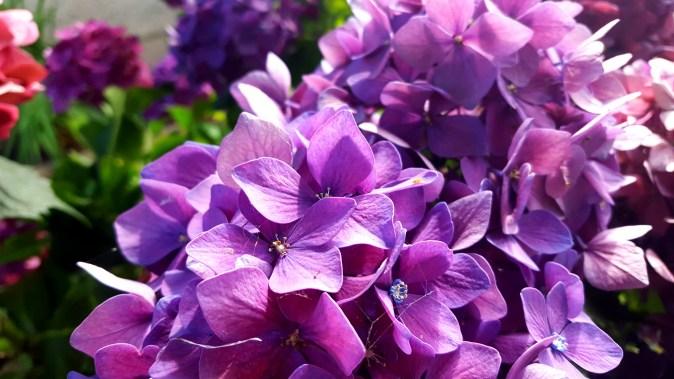 Purple10_VicWest