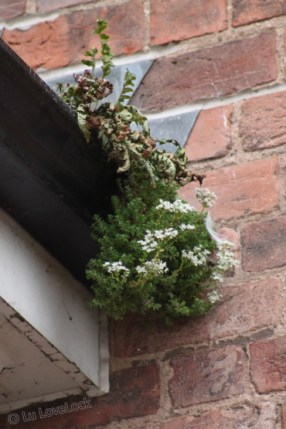 Plant growing in a gutter