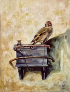 Goldfinch_C._Fabritius