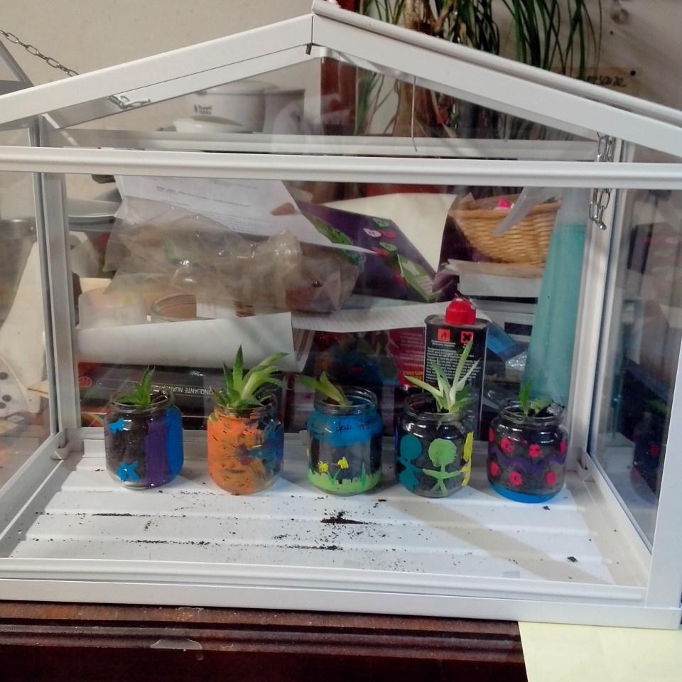 Cadeaux école - plante