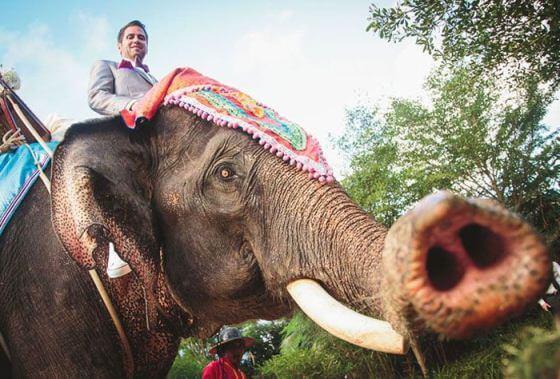 жених на слоне в тайланде