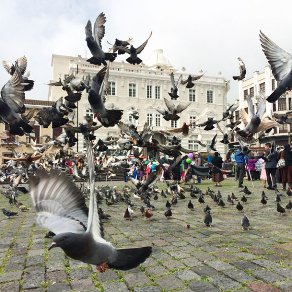 Lots of pigeons in the Plaza San Francisco.