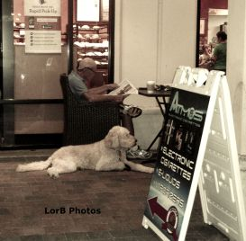 Bushy Dog Resting