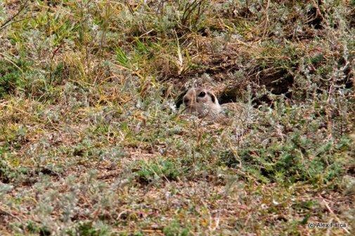 Fauna in Dobrogea