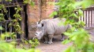 Lisabona Zoo 03