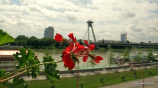 Bratislava 03 IMG_6196
