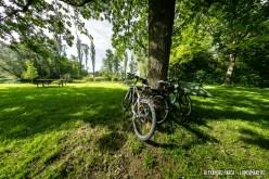 Donauradweg-Au-3654