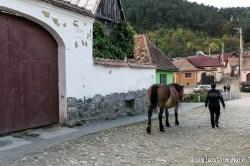 Marginimea-Sibiului-9691