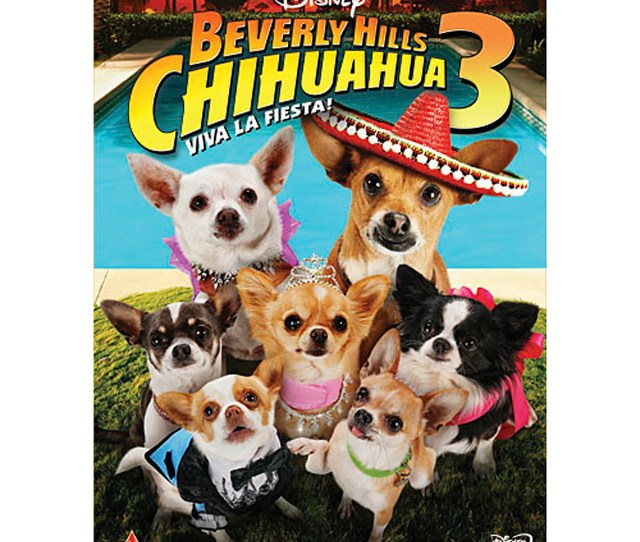 Product Image Of Beverly Hills Chihuahua 3 Viva La Fiesta Dvd 1