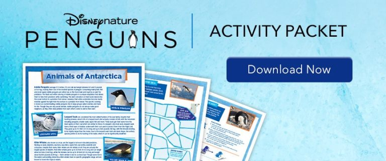 Penguins - Activity Packet