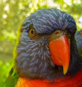 Close up of colourful parrot