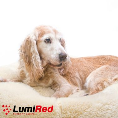 Red Light Therapy for Horses, Dogs and Pets
