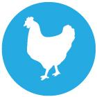 icon_chicken2