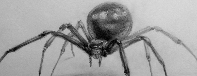 Сонник - паук