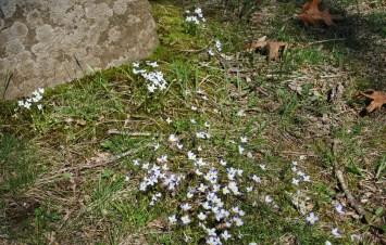 Gillette castle pond flowers