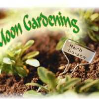 Gardening Calendar for August