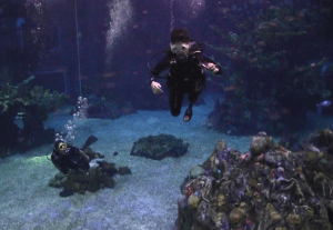 Walt Disney World's Epcot Seas Adventures DiveQuest