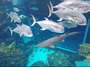 Sharks in the Tampa Aquarium