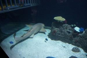 sharks Point Defiance Zoo & Aquarium
