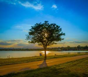 peaceful-tree
