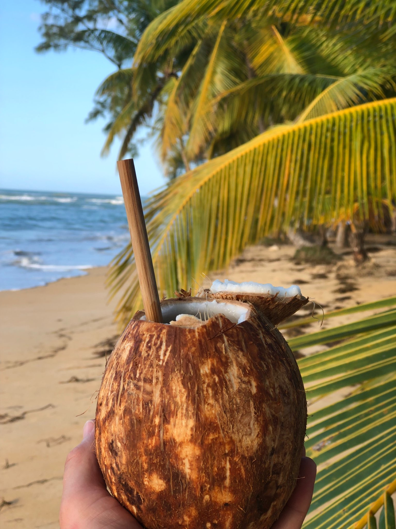 Bamboo Straw in Coconut
