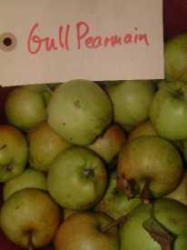 Gull Pearmain
