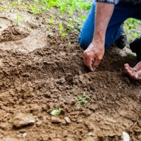 Get a Beautiful Yard While Cutting Down on Water Waste