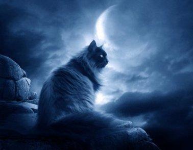 Wicca sorcellerie et chat noir