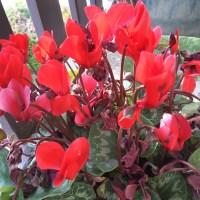 Vénus et les plantes magiques!