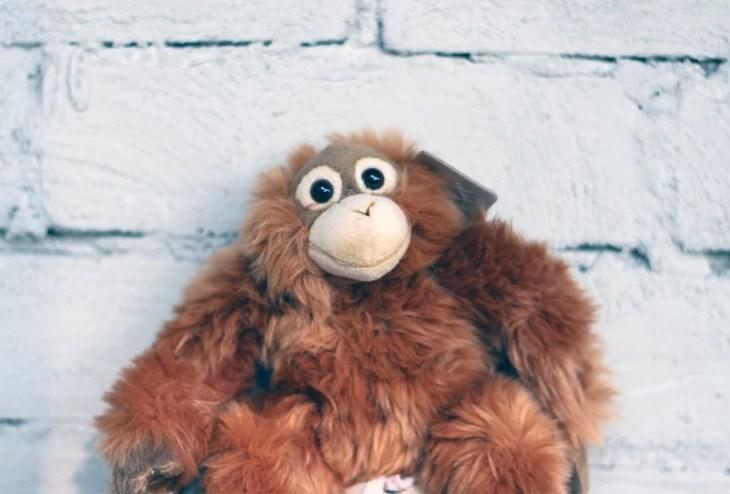 orangutang gosedjur