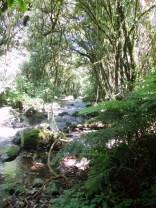 Green virgin forest