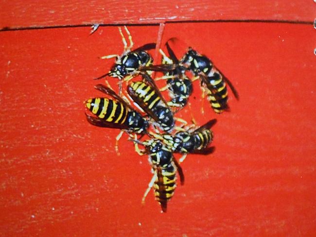 Kokemuksia ampiaiskarkottimesta