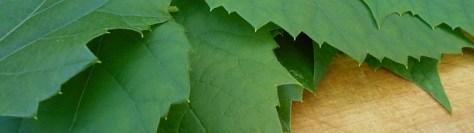 Viininlehtien säilöminen pakastamalla
