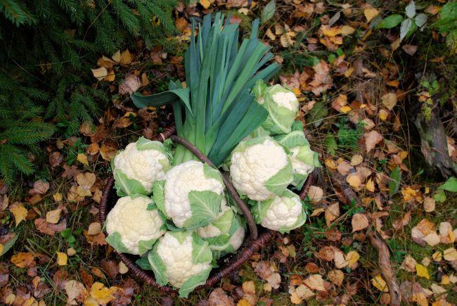 kukkakaali01