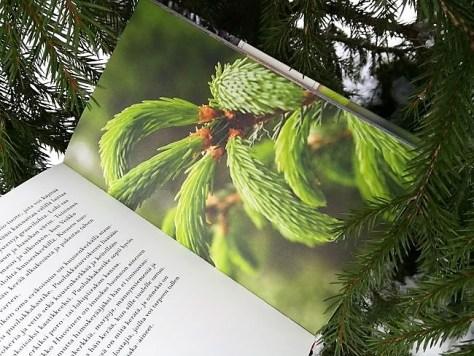 Luontoruokaa - tarinoita horsmasta harjukseen