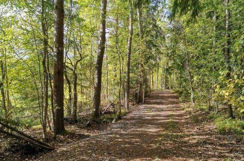 Syksyisen metsän tuoksua