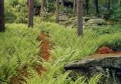 fern_path copy