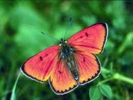 sunsetbutterfly
