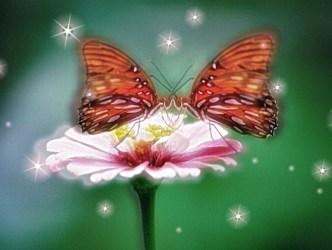 butterfly-kiss2