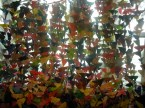 butterfly-curtain-1
