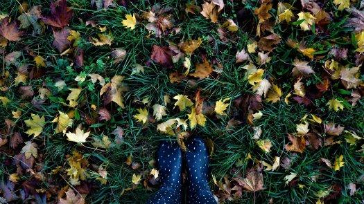 autumn leaves Nov21jpg