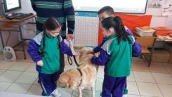 Guide Dog 2