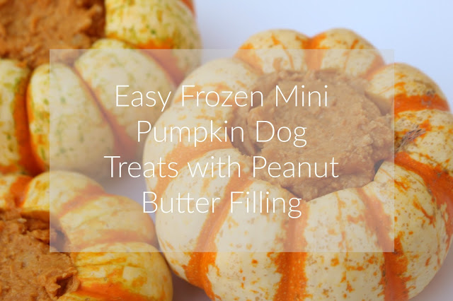 Easy Frozen Mini Pumpkin Dog Treats with Peanut Butter Filling