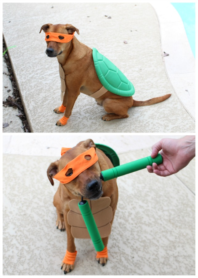 Ninja turtle costume diy for dogs